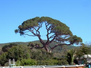 обои Кипарисовое дерево на Тоскане фото