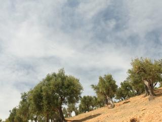 обои Баобабы под углом в пустынной местности фото