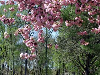 обои Розовое цветение посреди лета фото