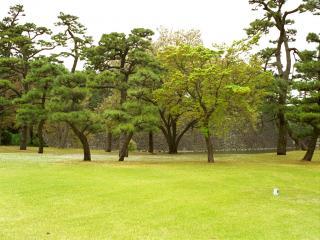 обои Императорский сад в Токио фото
