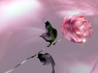 обои Нежная роза фото