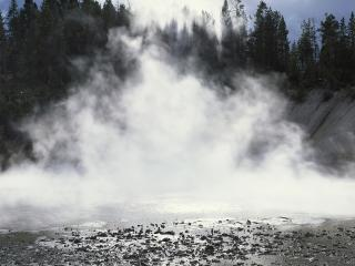 обои Дым в лесу фото