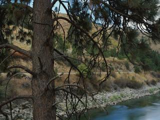 обои Большая сосна на фоне реки фото