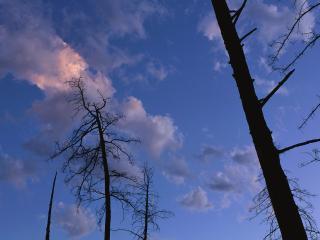 обои Стволы голых деревьев фото