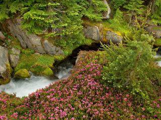 обои Маленький весенний ручей среди зелени фото