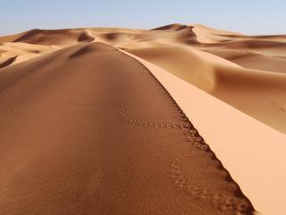 обои Золотые,песчаные дюны пустыни фото