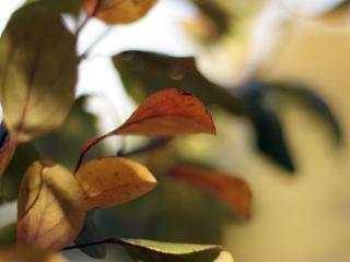 обои Цветные листья дерева увеличенные в несколько раз фото