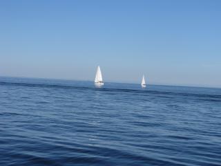 обои Яхты в море фото