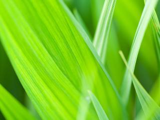 обои Зелень просвечивает насквозь фото