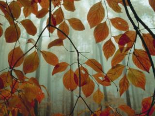 обои для рабочего стола: Сквозь листья