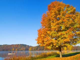 обои для рабочего стола: Осень прекрасна