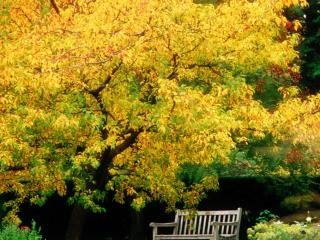 обои Скамья под кронами деревьев фото