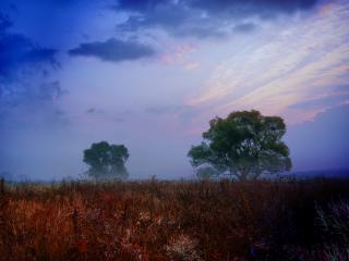 обои Легкий туман в лесу фото