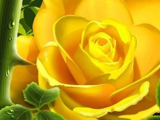 обои Желтая колючая роза фото