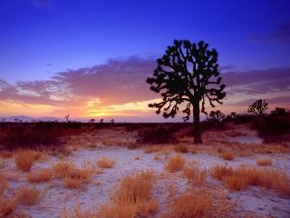 обои Закат Юкки коротколистной,   пустыня Мохаве,   Калифорния фото