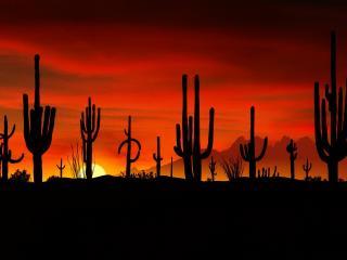 обои Цереусы гигантские,   пустыня Соноран,   Аризона фото
