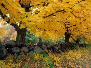 обои Золотой Сезон в Новой Англии фото