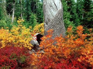 обои для рабочего стола: Осень в Лугах Вереска,   Северных Каскадах,   Washi