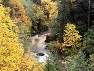 обои Осенний Цвет,   Река Coquille,   Орегон фото
