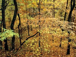 обои Осенний Лес,   Перси Варнер Парк,   Нашвилл,   Десять фото