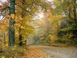 обои Свежий Осенний День,   Вермонт фото