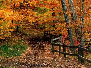 обои Парк государства Ручья Маккормика,   Индиана фото