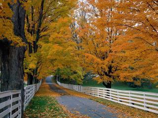 обои Scenic Backroad,   New Hampshire фото