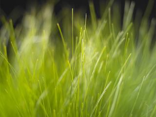обои Высокая трава фото