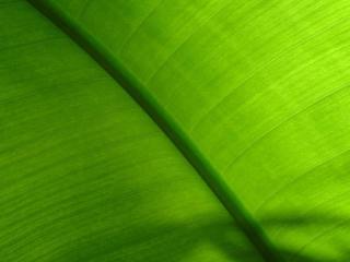 обои Зеленая природа фото