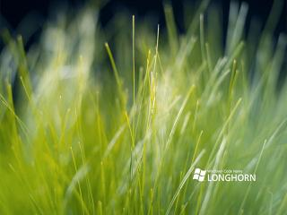 обои Травяна природа фото