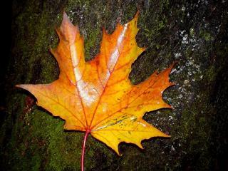 обои Пожелтевший листок на земле фото