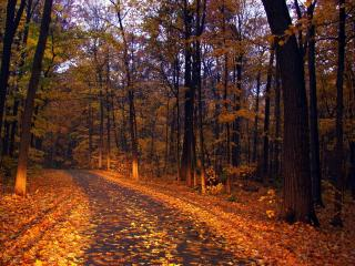 обои Осенний лес дорога фото