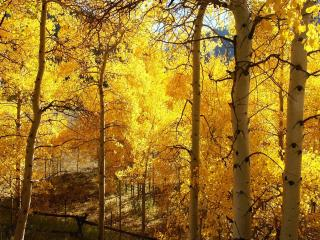 обои Осенний лес фото