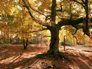 обои Старенькое дерево фото