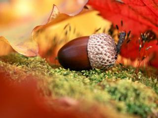 обои Осень, листья фото