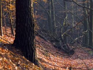 обои Осень, деревья фото