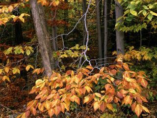 обои Старый лес осень фото