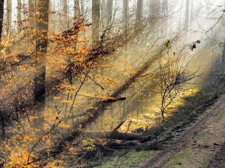 обои Солнце среди деревьев в осеннем лесу фото