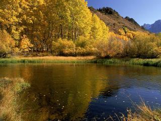 обои Осенний лес и озеро фото