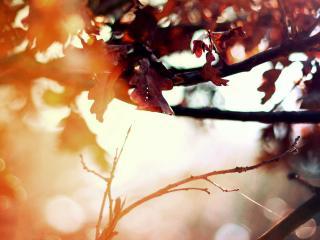 обои Обои осень фото