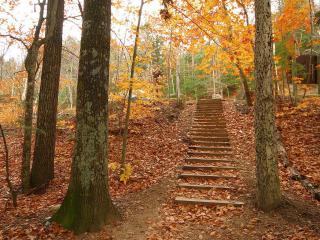 обои Ступеньки в осеннем лесу фото