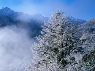 обои Дымка зимнего леса фото