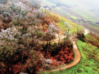 обои Осень в цвете фото