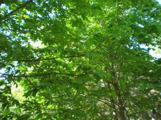 обои Кусочек весеннего неба сквозь зеленую листву фото