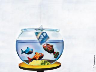 обои Обед у рыбок фото