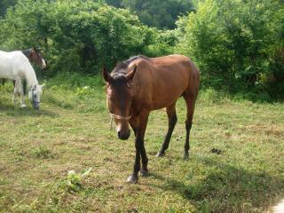 обои конь на лужайке фото