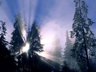 обои Сияние сквозь деревья фото
