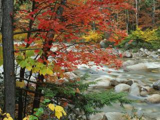 обои Река осенью фото