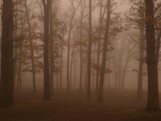 обои Вечернии лес фото