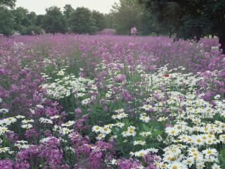 обои Поляна цветов фото